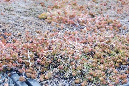 Green Roofs Aren't Perfect—Yet - Environment - GOOD | Sustainable Futures | Scoop.it