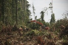 World's Largest Palm Oil Company Commits To Zero Deforestation | Infraestructura Sostenible | Scoop.it