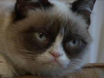 Which Meme Cat Are You?: Animal Planet | Les chats c'est pas que des connards | Scoop.it