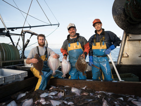 The West Coast Groundfish Recovery: The Best Fish News You Haven't Heard Yet | Food issues | Scoop.it