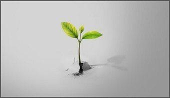 Brotes verdes hacia la no discriminación | Sindrome de Down | Scoop.it