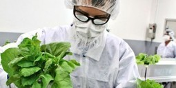 Fight Flu With Tobacco [vaccines] | Virology News | Scoop.it