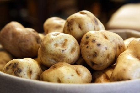 Scientists Reveal The Cause Of The Irish Potato Famine | Articles mentioning The Sainsbury Laboratory, Norwich | Scoop.it