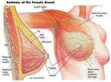 Breast care after delivery - Only About Pregnancy   onlyaboutpregnancy   Scoop.it