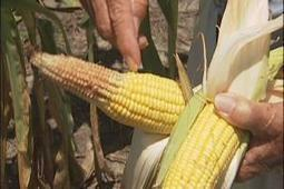National drought a double-edged sword for NC farmers | WWAY NewsChannel 3 | Wilmington NC News | North Carolina Agriculture | Scoop.it