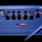 Use transgenic fish to make bioluminescent sushi rolls | Indigo Scuba | Scoop.it