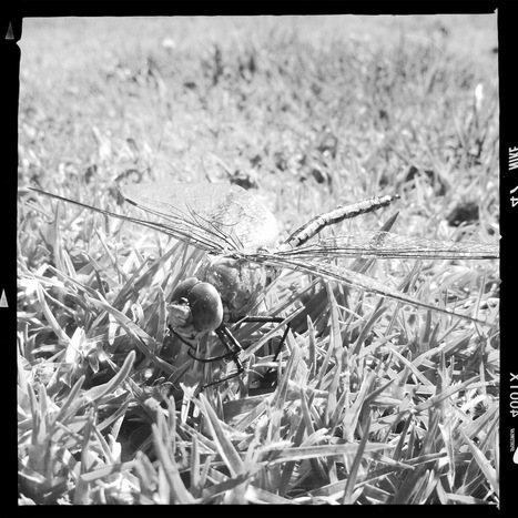 Dragonfly | Hipsta | Scoop.it