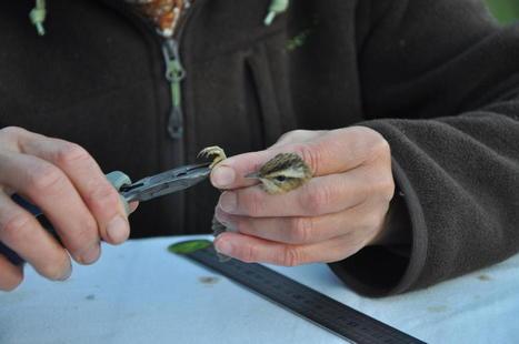 Merlimont, étape de choix pour les oiseaux migrateurs avant la ... - La Voix du Nord | merlimont 75 | Scoop.it