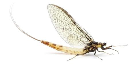 11 - Un TP, un article: La Croisière ça Mue | EntomoScience | Scoop.it