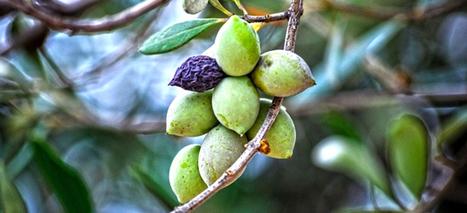 Cretan Diet/Cuisine - CreteTravel | Cretan Cuisine | Scoop.it