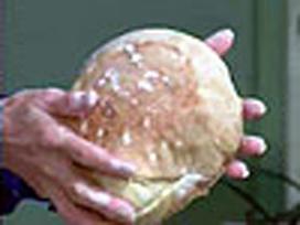 Crusty Science: Bread | Science of Cooking | Exploratorium TV | STEM Connections | Scoop.it