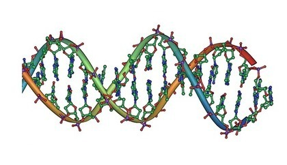 Researchers find short tracks of DNA may aid in regulating human gene expression | Amazing Science | Scoop.it