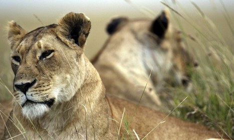 Leaders of the pack can make a real difference to charities - The Guardian   Leadership Resources for Students   Scoop.it