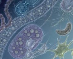 Editing Human Embryos: So This Happened – Phenomena: The Loom   IB Biology   Scoop.it