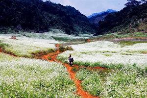 Du lịch theo những mùa hoa   Sinhcafe Hà Nội   Scoop.it