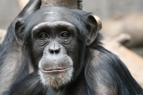 Animal Smarts | Animals R Us | Scoop.it