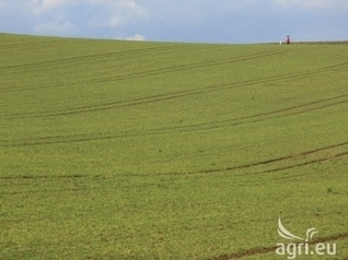 EU agriculture: French grain crops still in good shape | CIHEAM Press Review | Scoop.it
