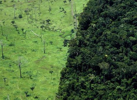 Brésil: La ferme du monde contre le poumon de la planète | Questions de développement ... | Scoop.it