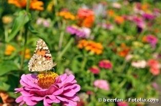 Côté jardin : Comment inviter les papillons dans son jardin ? | Vie de famille, Beauté & Bien-être de Melodie68 | Scoop.it