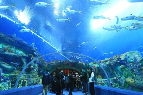 World's Largest Aquarium Opens In China | Xposed | Scoop.it