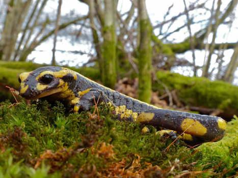 Zapéco n°2: Les 10 meilleures épisodes de «La minute Nature» - DEFI-Écologique : le blog   De Natura Rerum   Scoop.it