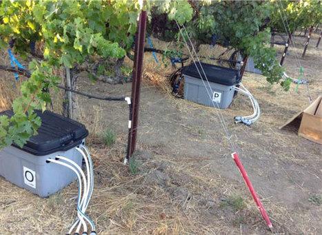UC Davis Looks to the Future / Wine | Winemak-in | Scoop.it