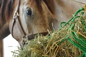 Hay: To Soak or Not to Soak? | Horse and Rider Awareness | Scoop.it