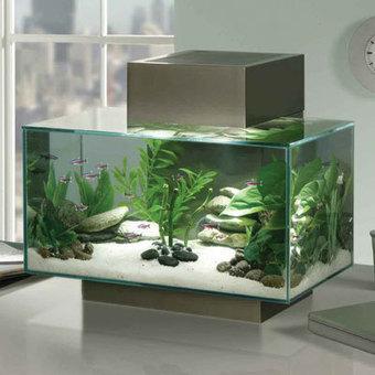 Como limpiar el acuario sin perder ningún pez : TiendAnimal | Acuarios | Scoop.it