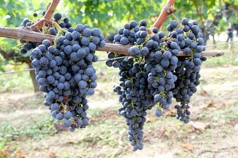 Lunsj og tøffe tønner i Saint-Émilions vinmarker   Tourisme   Scoop.it