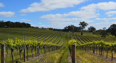 Group interview: Australian wines in China in the post-Free Trade era | Vinideal - A la recherche de votre Vin Idéal ! www.vinideal.com | Scoop.it