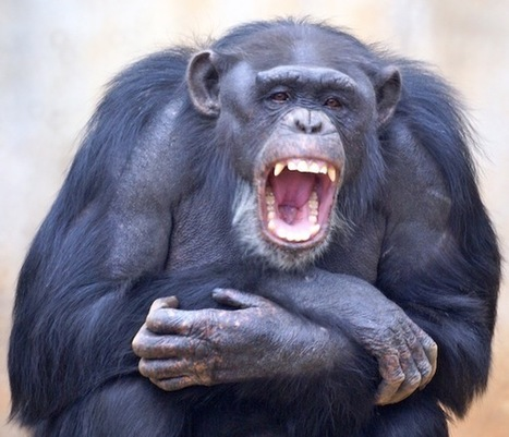 Studying Contagious Yawning Might Help Us Build Better Societies | Social Neuroscience Advances | Scoop.it