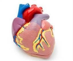 First Human Artificial Heart Implantation   Medindia   LibertyE Global Renaissance   Scoop.it