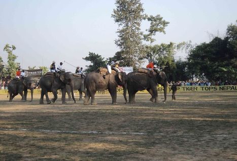 The Magnificence of Polo playing Elephants of Chitwan, Nepal | Lifestyle Design Travel | Scoop.it
