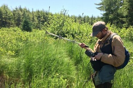 More Blanding's: Nova Scotia turtle researchers hit the jackpot with new discovery | Nova Scotia Hunting | Scoop.it