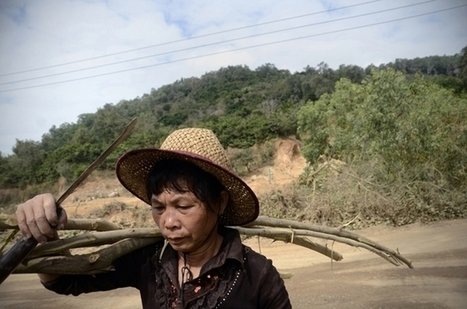 Here's How This Giant Chinese Forest Disappeared | Forests | Scoop.it