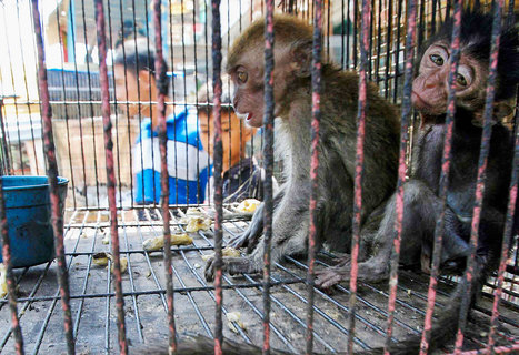 The World Has a Chance to Make the Wild Animal Trade More Humane | Ethics? Rules? Cheating? | Scoop.it