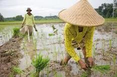 Noticias de Prensa Latina - China impulsará en 2015 modernización de su agricultura | iRiego | Scoop.it