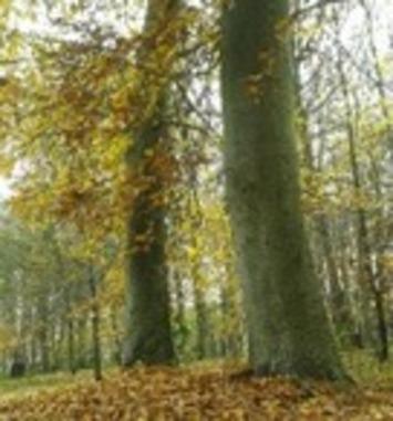 Forêts - L'ONF vote son contrat d'objectifs pour 2016-2020 - Environnement Magazine | Bois, forêt, construction, bois énergie, ameublement et plus | Scoop.it