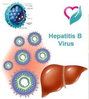 Hepatitis B – Get Informed of the Deadly Virus | Emily's Year 9 Journal | Scoop.it