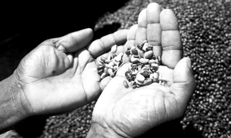 Activists up in arms over seeds laws | Food issues | Scoop.it