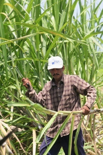 Thousands of Sugar Cane Workers Die as Wealthy Nations Stall on Solutions | Occupational Safety and Health | Scoop.it