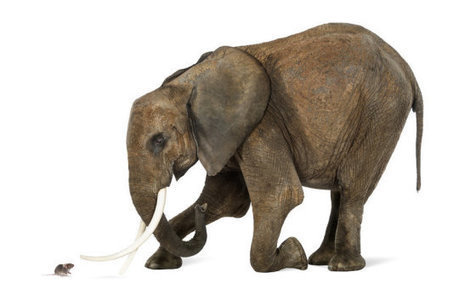 Why mice have longer sperm than elephants | Amazing Science | Scoop.it