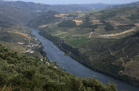Real Companhia Velha | The Douro Index | Scoop.it