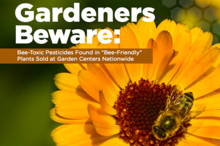 Deadly Pesticide 'Bee Friendly' Pretreated Plants Sold to Consumers | YOUR FOOD, YOUR HEALTH: #Biotech #GMOs #Pesticides #Chemicals #FactoryFarms #CAFOs #BigFood | Scoop.it