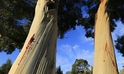 Melbourne's trees bombarded with emailed love letters | This Gives Me Hope | Scoop.it