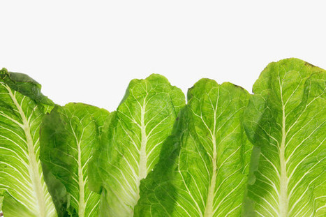 Enjoy Your Romaine Lettuce—While It Lasts | Vertical Farm - Food Factory | Scoop.it