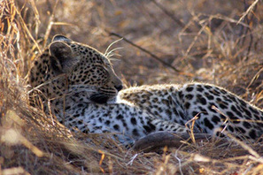 4 day Kruger Treehouse safari Kruger Tours | Kruger & African Wildlife | Scoop.it