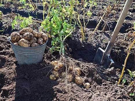 Root Vegetables For Your Garden - Oneindia Boldsky - Boldsky.com   Gardening   Scoop.it