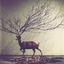 ART : Les installations surréalistes de Kim Myeongbeom | Médiation culturelle, art contemporain et publics réfractaires | Scoop.it