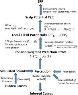 A Neurocomputational Model of the Mismatch Negativity | Social Foraging | Scoop.it